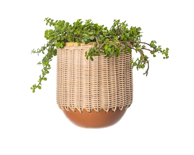 Hercule terracotta plantter thumb