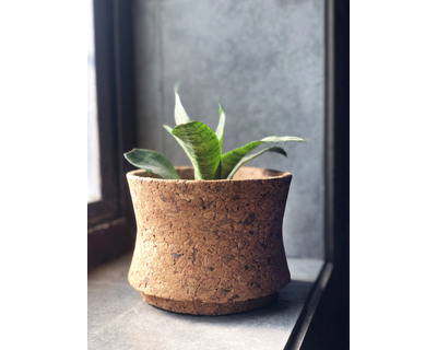 Matka planter thumb